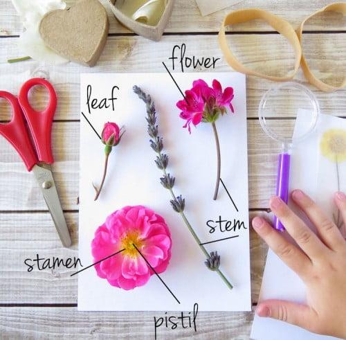 Botany Box for kids