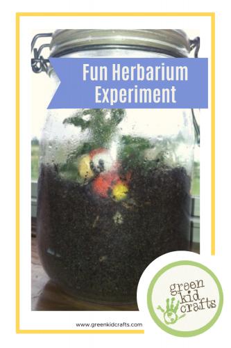 fun herbarium experiment