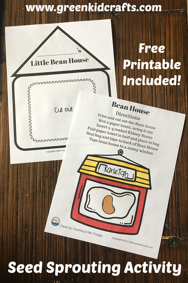 Seed sprouting activity for kids. Grow a seed in a bean house with this free printable science activity.