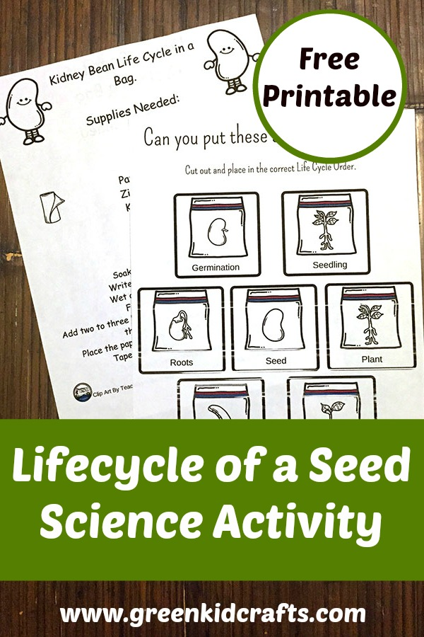 Seed lifecycle activity with printable.