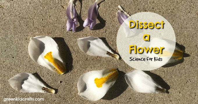flower dissecting project