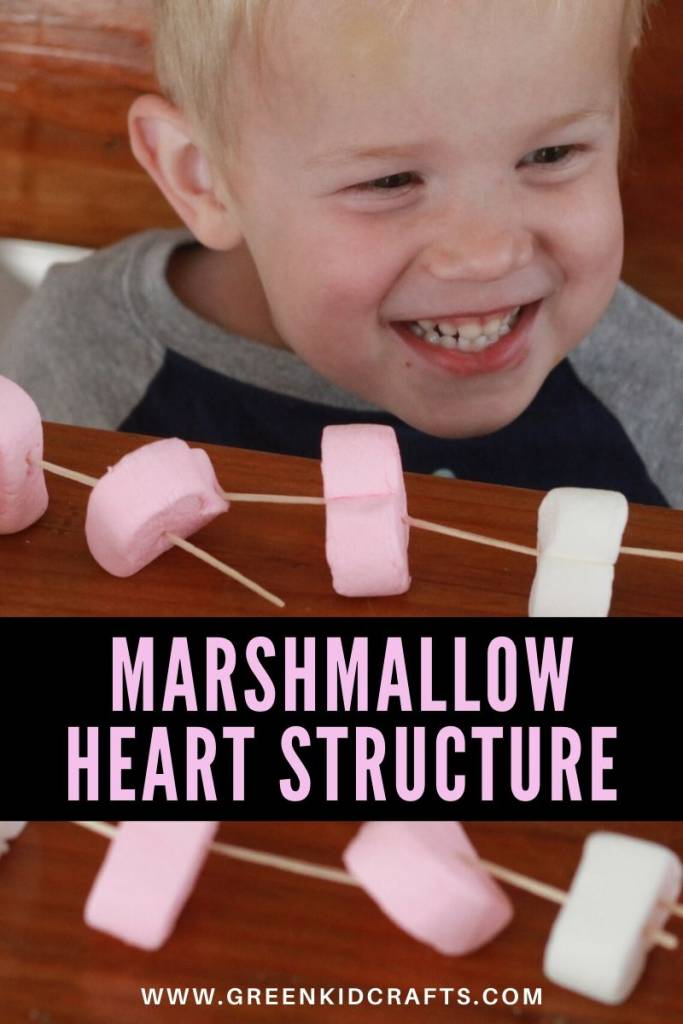 Marshmallow Heart Structure - Looking for educational toys, science kits, monthly crafts for kids, monthly subscriptions for kids, a monthly craft box or kids craft subscription? Green Kid Crafts, kids craft subscription and maker of the best subscription boxes, including award-winning arts and craft subscription boxes and best monthly subscription boxes has what you're looking for!